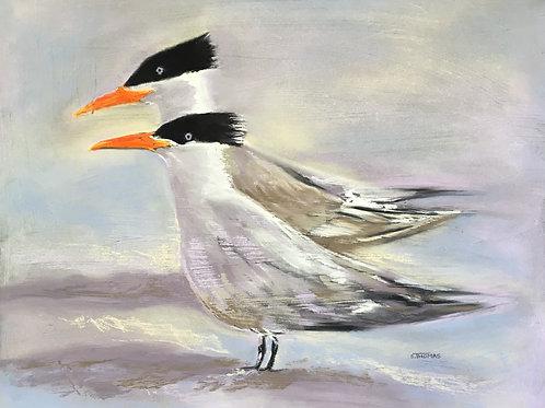 ST73 Royal Terns