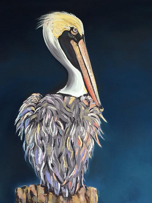 ST31 Plato - Pelican