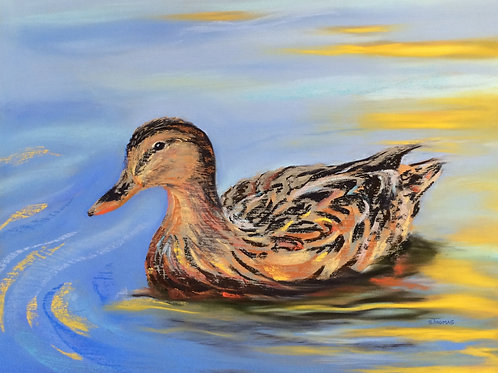 ST9 Daphne - Duck