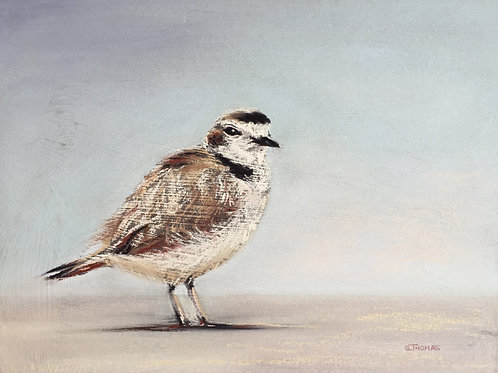 ST25 Polly - Snowy Plover
