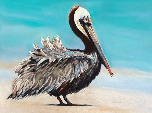 ST29 Posh - Pelican
