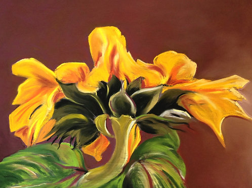 ST24 From Beneath - Sunflower