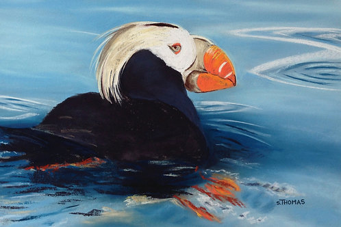 ST57 Harvey - Tufted Puffin