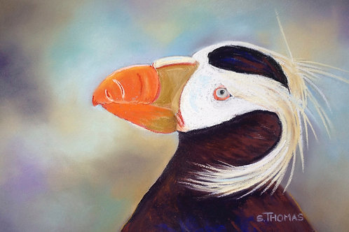 ST26 Hester - Tufted Puffin