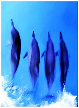 bluespherephotography.com © - OCEAN VIEWS - Dolphin Freedom