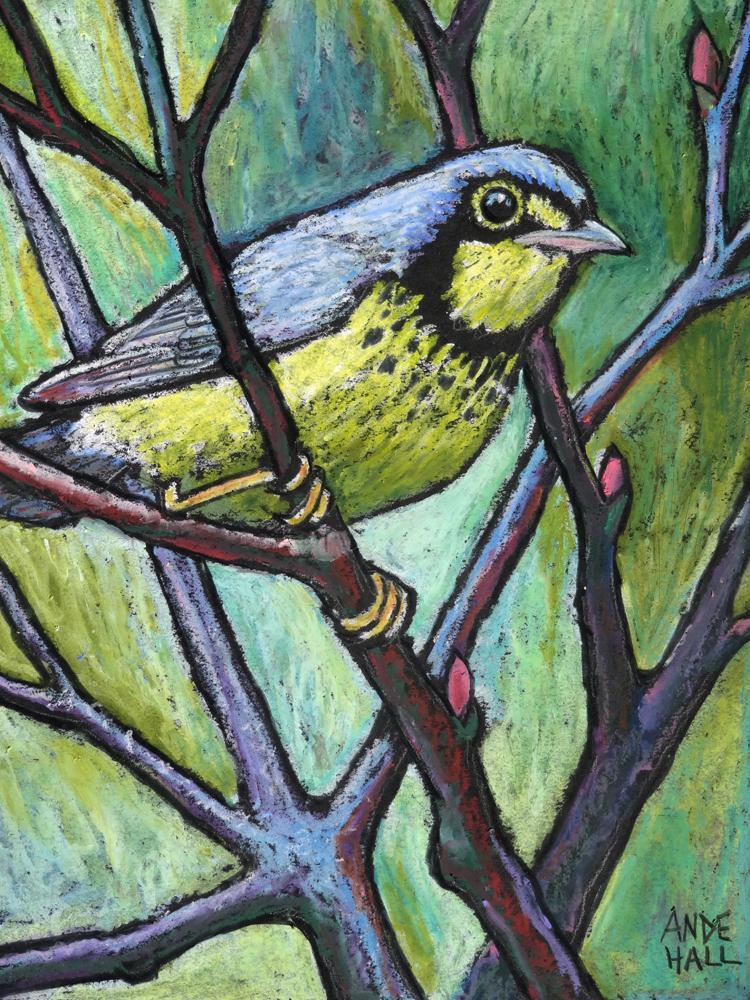 canada warbler int