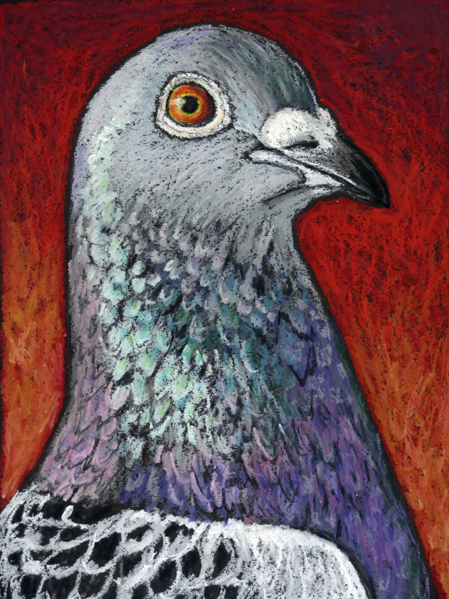 Blaze the Racing Pigeon int