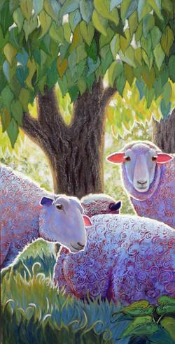 SHINING SHEEP