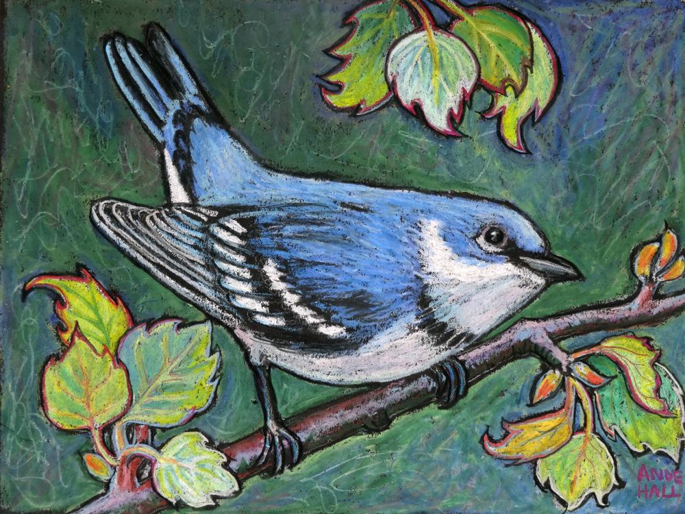 cerulean warbler int