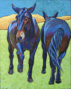 MULES HEAD TO TAIL