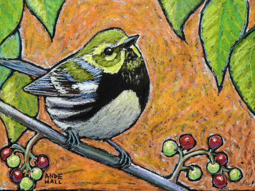 Black throated green warbler int