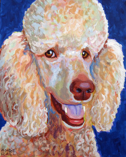 Gypsy poodle int