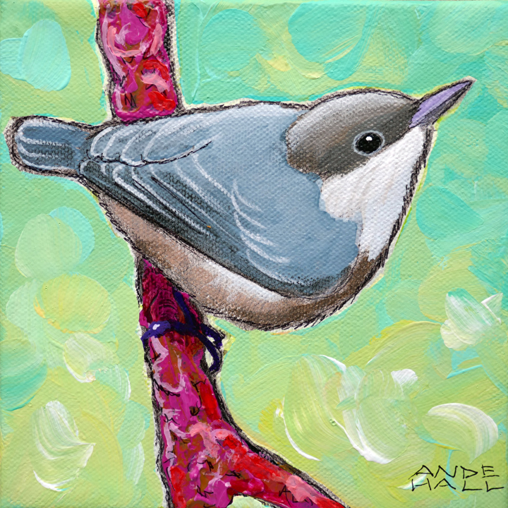 PYGMY NUTHATCH 1