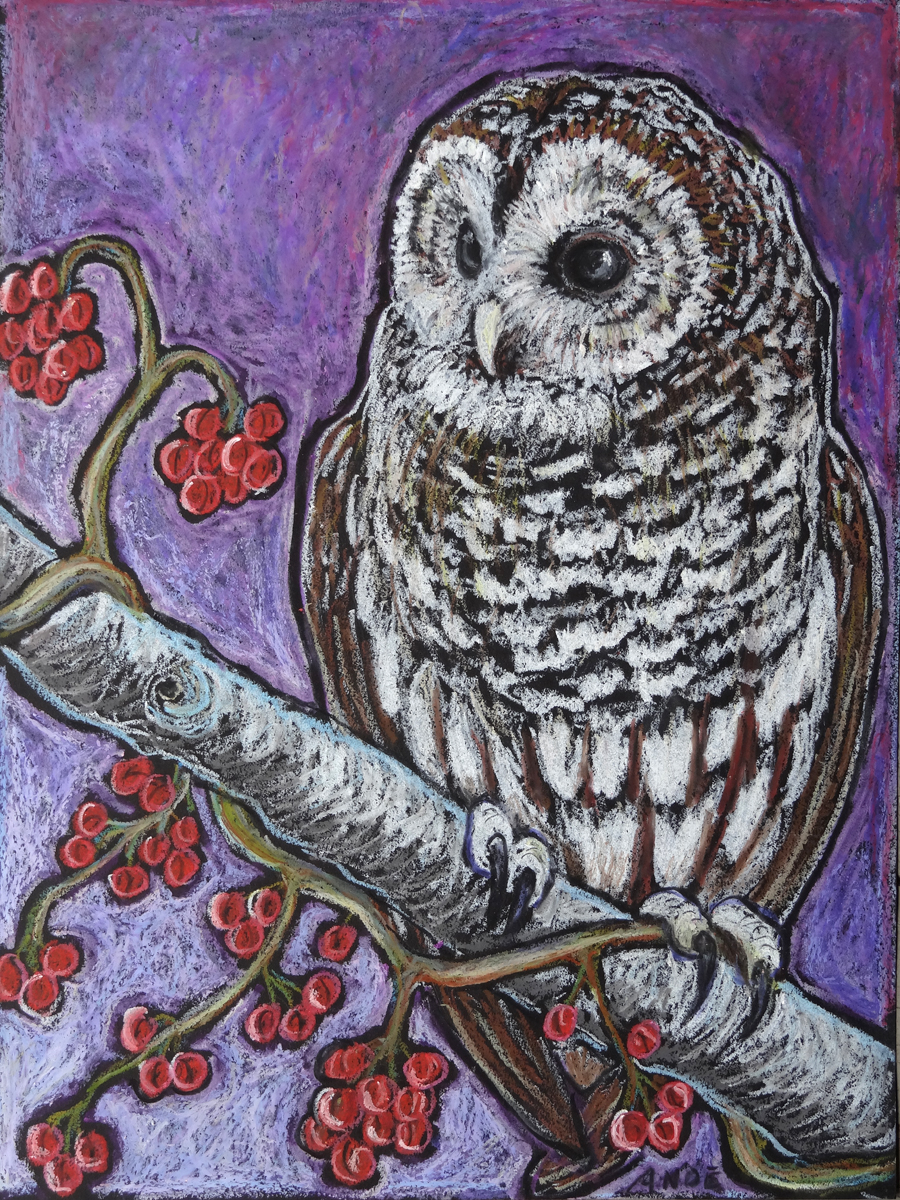 barred owl revised int