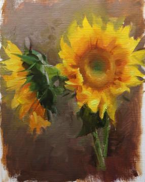 sunflowers_6_20_20_2.JPG
