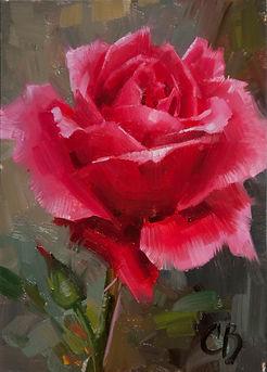 pink_rose_5_x_7.jpg
