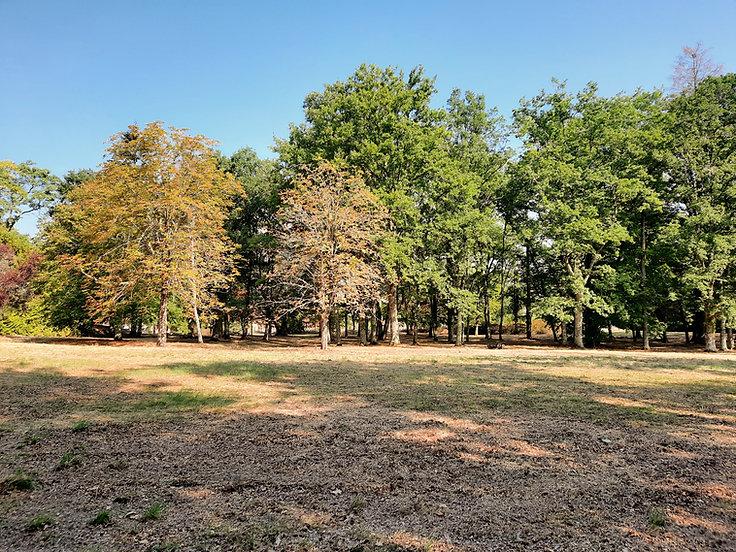 Forêt terrain à bâtir environnement bois