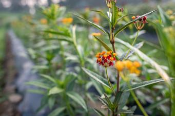 flowerfields-6.jpg
