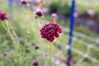 flowerfields-9.jpg