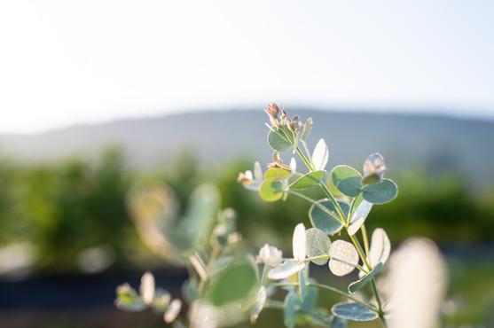 flowerfields-21.jpg