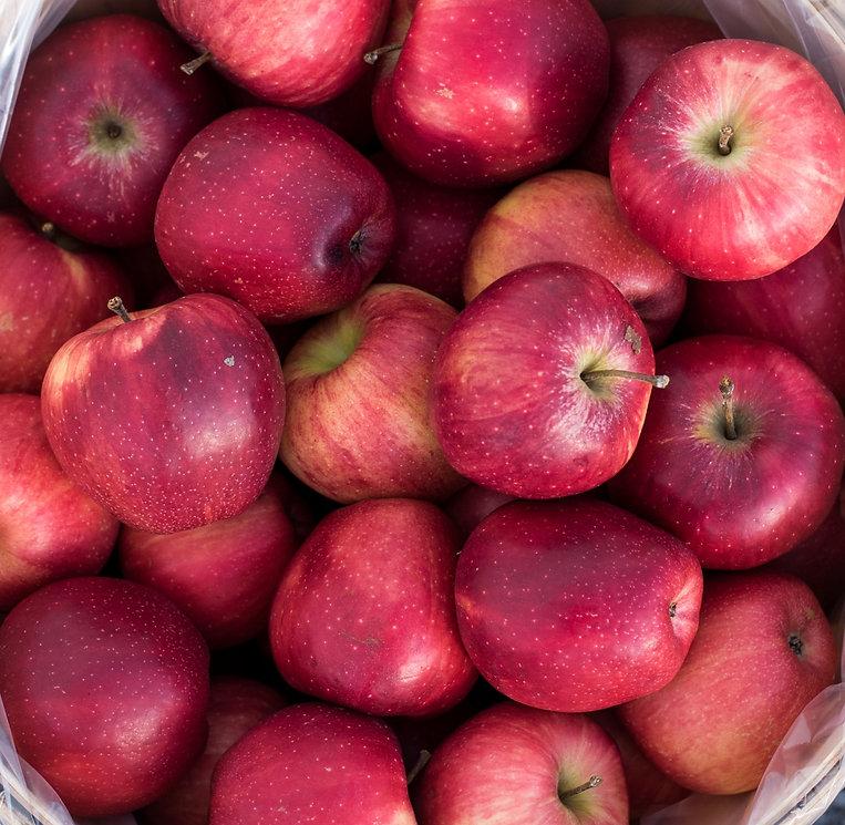 showalters_apples-3_edited.jpg