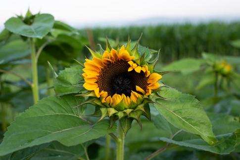 flowerfields-16.jpg