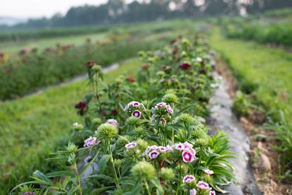 flowerfields-5.jpg