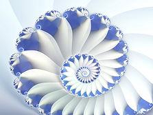 blue-nautilus-wallpaper.jpg