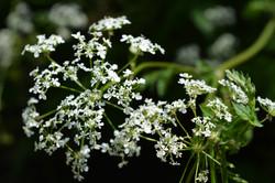Heaven in Wild Flower