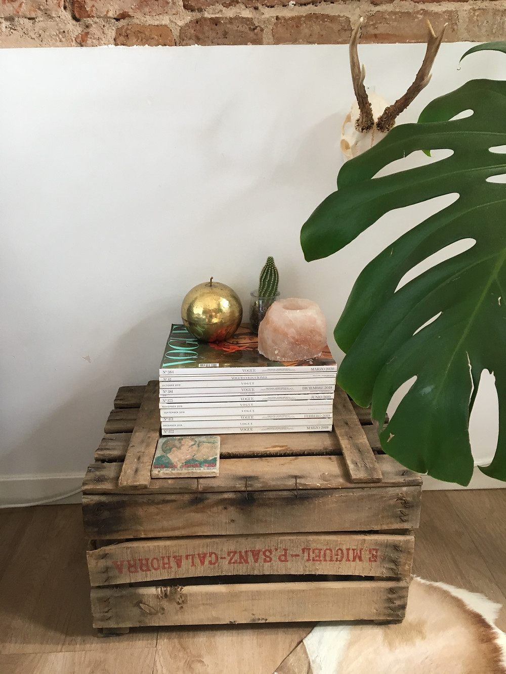 Interior plants for allergies