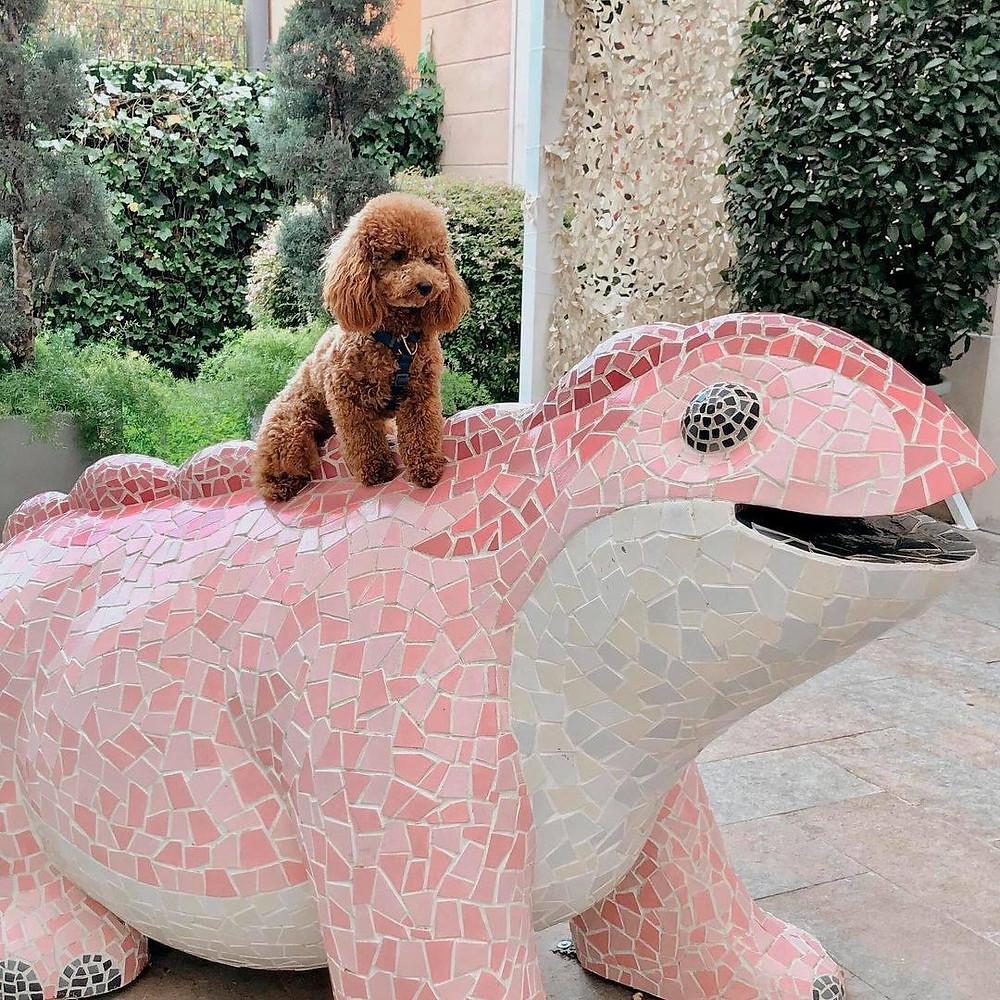A dog sitting on top of a ceramic tiled lizard at La Roca Village