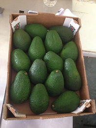 avocado-500x500.jpeg