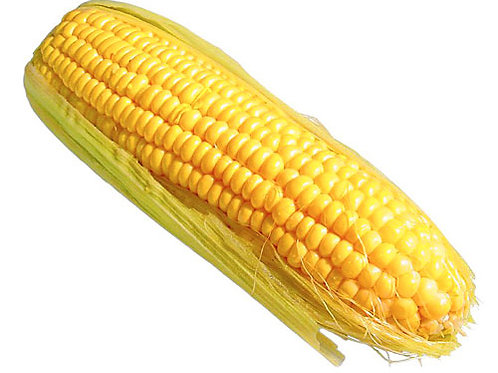 Pre-cooked Sweet Corn (France)
