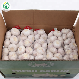 Size-5-6cm-fresh-pure-white-garlic.png