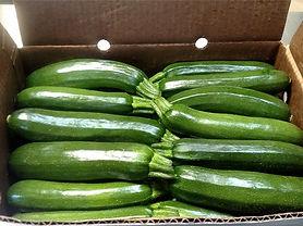 Zucchini_box_large.jpg