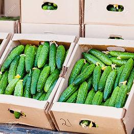 75050831-cucumber-in-box-on-sale-cucumbe