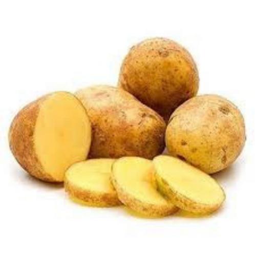 Potato Agria (The Netherlands)