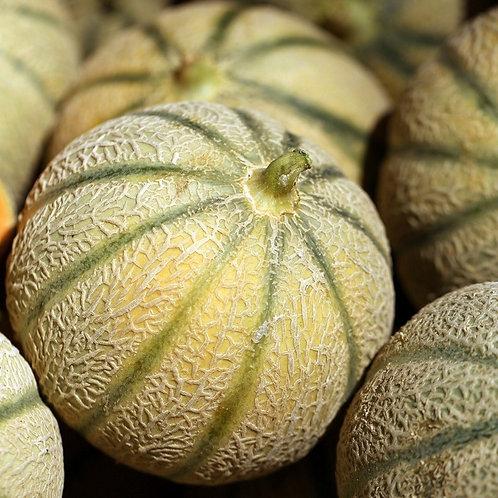 Melon Charantais (France)