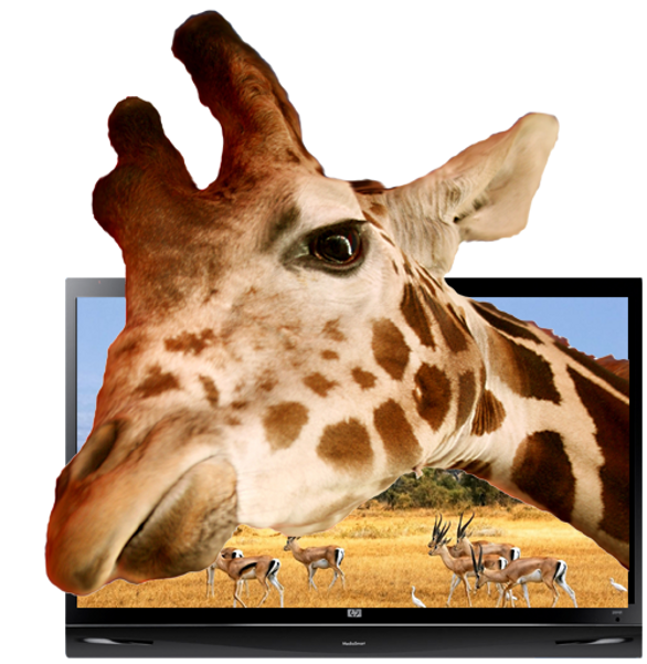Girafe_TV_2.png