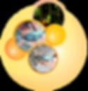 ronds_oranges_72dpi_209x217px.png