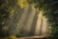 Sonnenstrahlen Westerwald Spaziergang