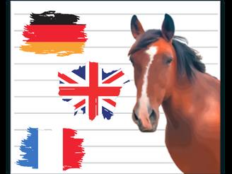 Langues étrangères et équitation, une nouvelle page est née