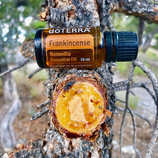 Frankincense the King of Oils