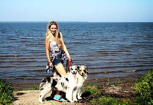 щенок австралийская овчарка аусси купить щенка питомник австралийских овчарок aussie australian shepherd for sale puppy
