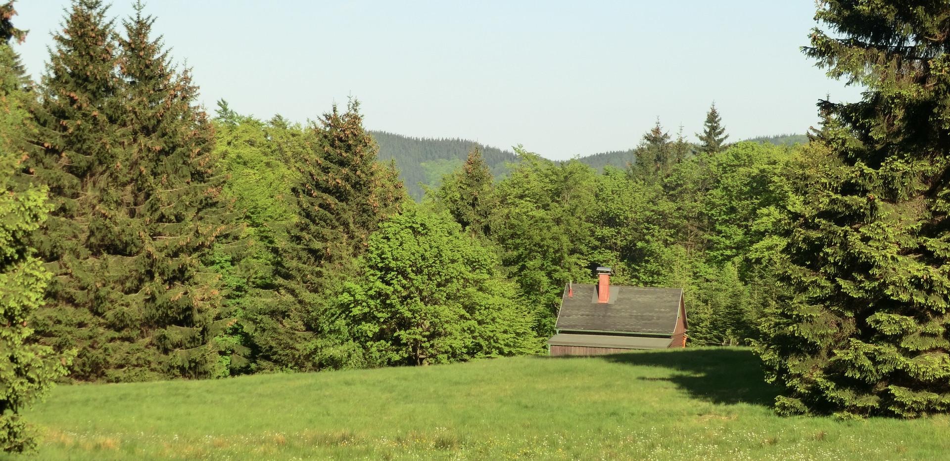 Forsthütte im Wald