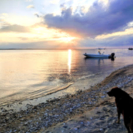 sunset boat with dog_edited.jpg