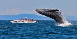 whales-in-warrnambool