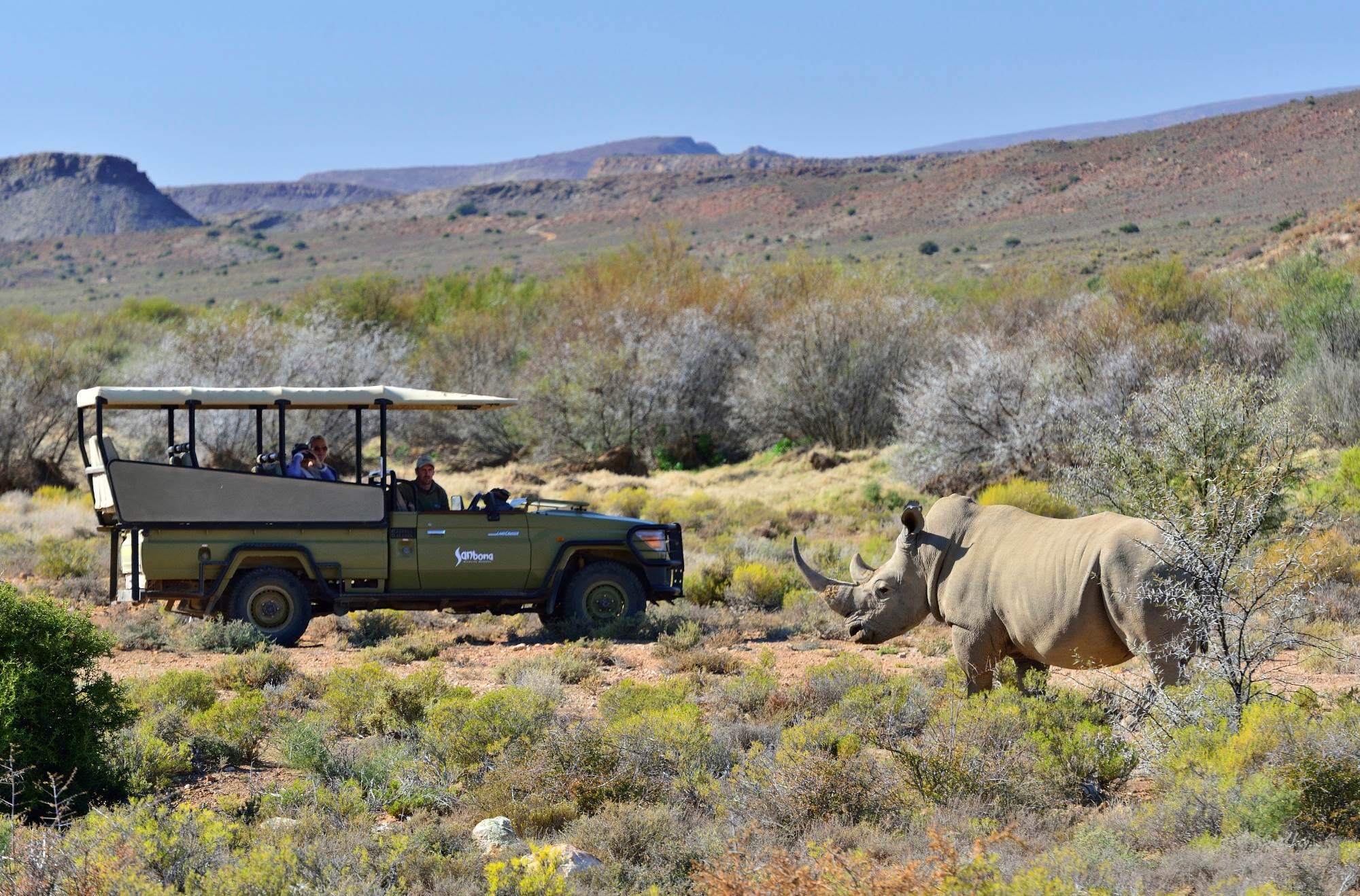 sanbona-rhino