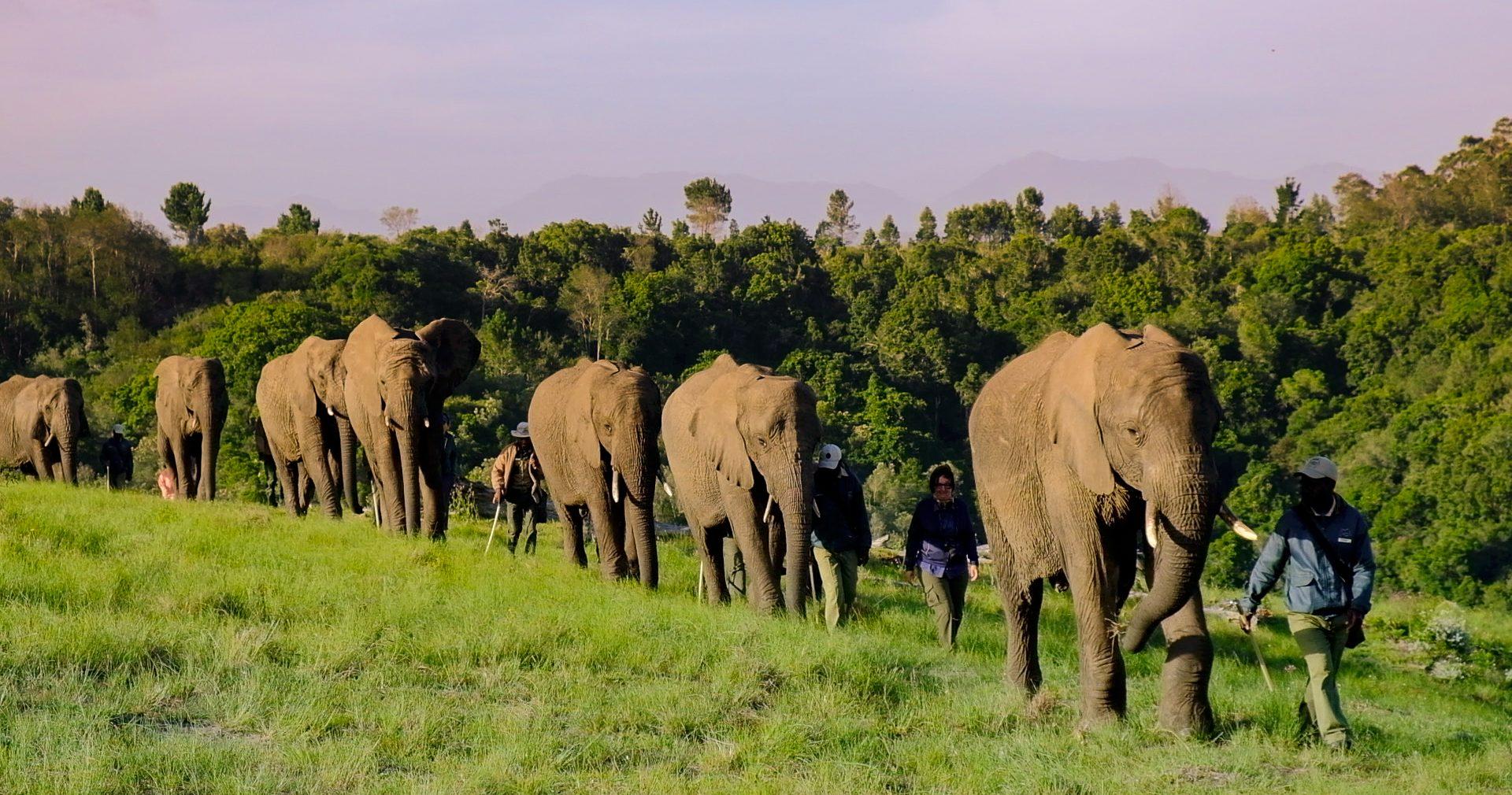 cropped-Knysna-Elephant-Park-Elephant-Sa
