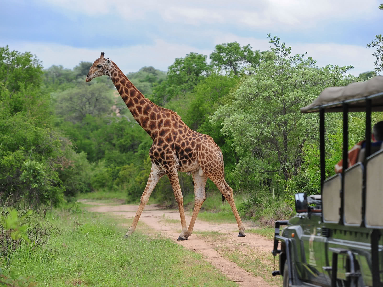 fitzpatricks_at_jock_Safari